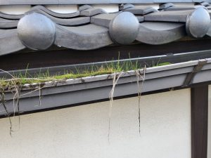 草の生えた雨樋