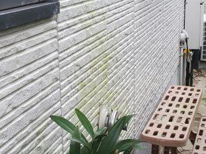 外壁の苔汚れ